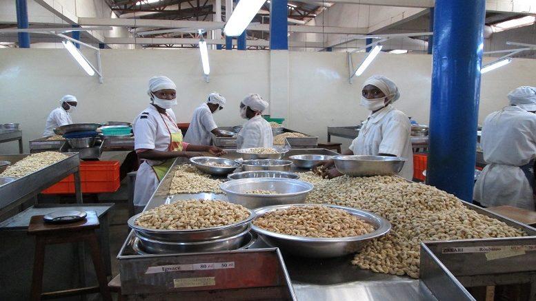 Bénin : le fonds Moringa investit dans l'entreprise de noix de cajou Tolaro Global